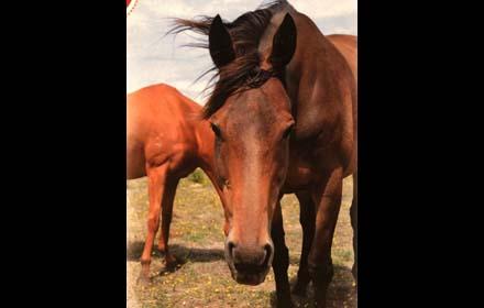 brightside horses beau