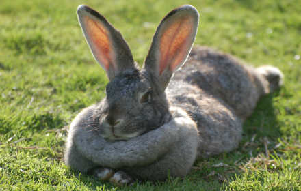 brightside rabbits mrs. bun