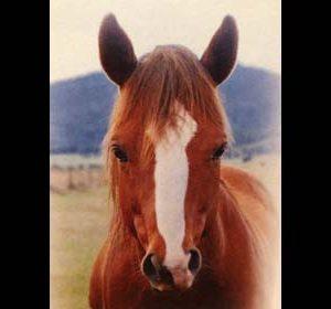 brightside horses rocky