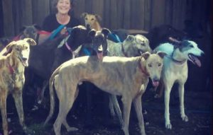 brightside greyhounds