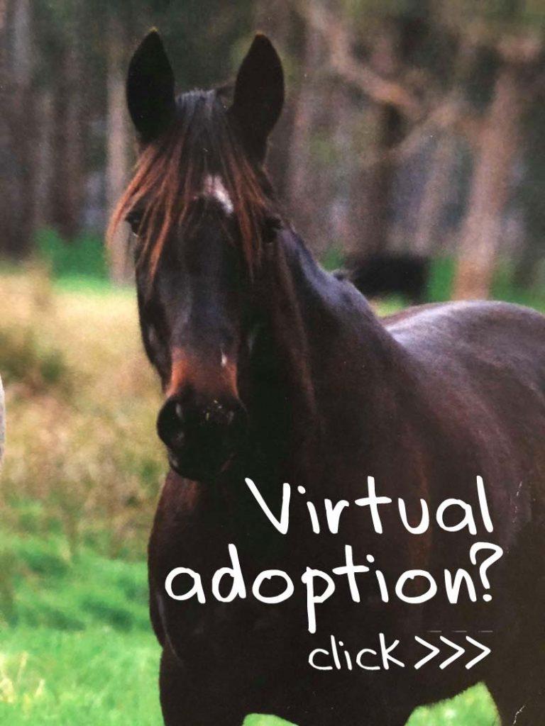 brightside virtual adoption